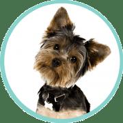 hyperkeratosis dogs