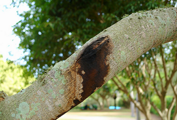 Legal Processes Involved in Removing Trees